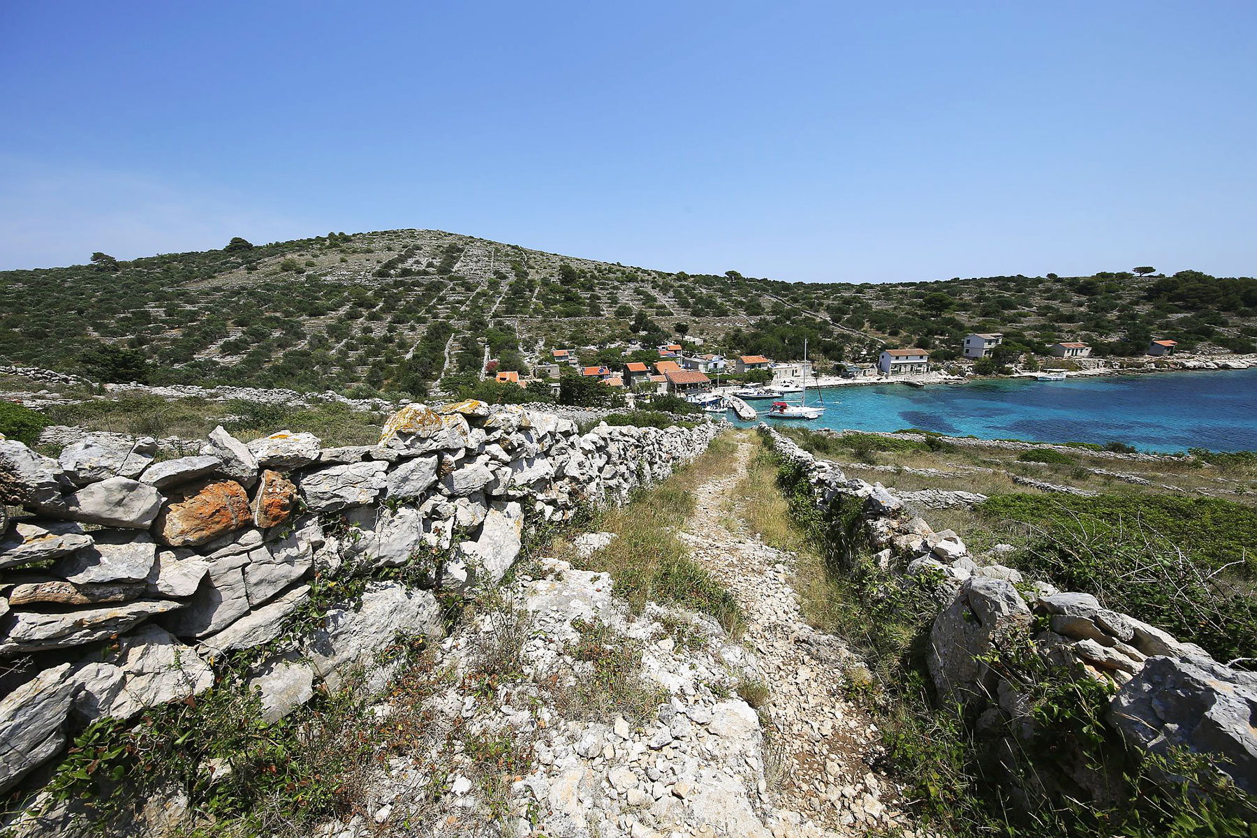 Archipelago Tours Photo of bay in Kornati with olive trees, stonewalls, small houses and boats in the clear blue sea